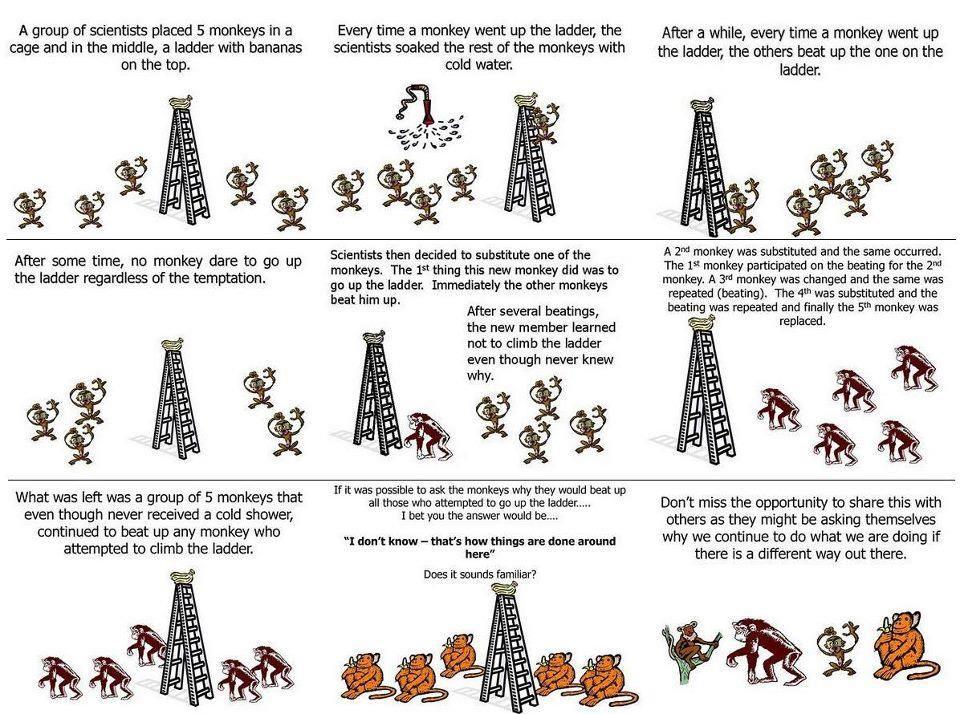 How organisational culture creates behavioural patterns